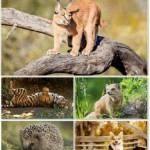 Веселые картинки с животными для фона рабочего стола 96